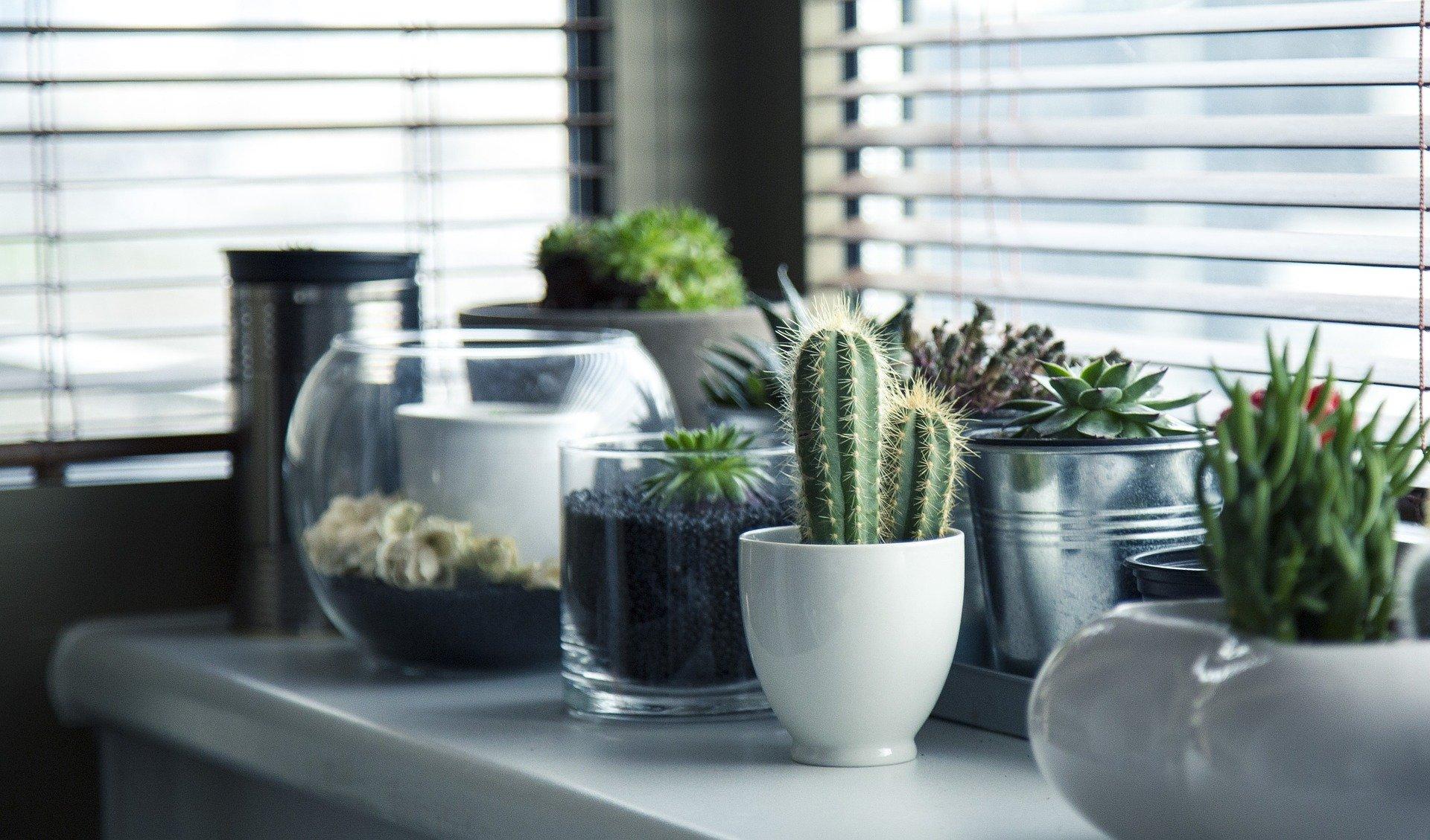 Comment mettre en place soi-même son petit jardin d'intérieur?